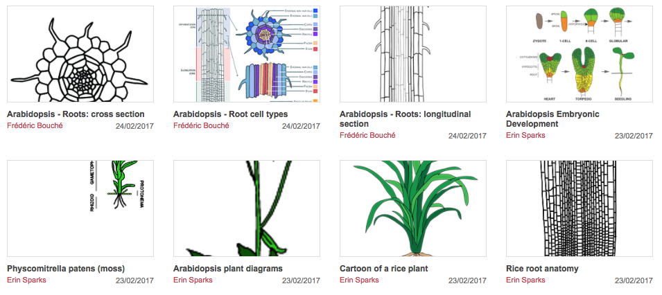 Plantae A Community Repository Of Plant Illustrations Plantae