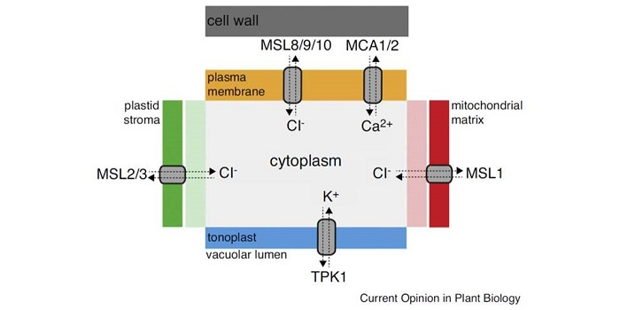 Current topics in membranes: Mechanosensitive Ion Channels: Part A
