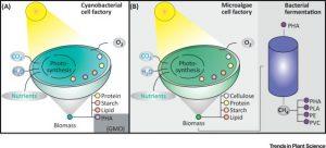 Plantae | Review: Green Bioplastics as part of a circular bioeconomy
