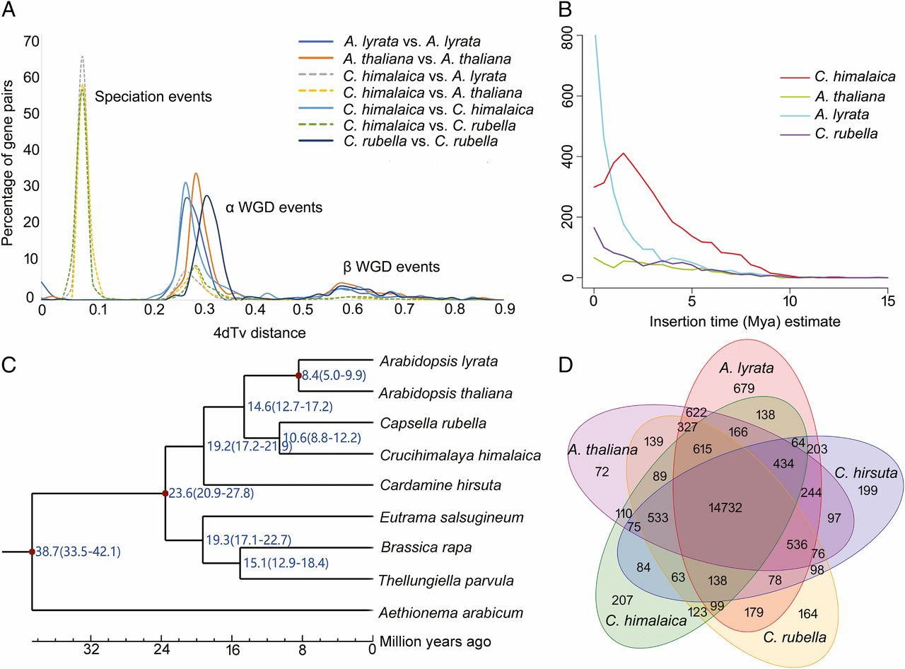 Shared Epigenetic Changes Underlie >> Plantae Dramatic Changes In Repeat Element Content And Gene Family