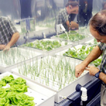 Image of Raymond Wheeler working with Plants in a laboratory setting