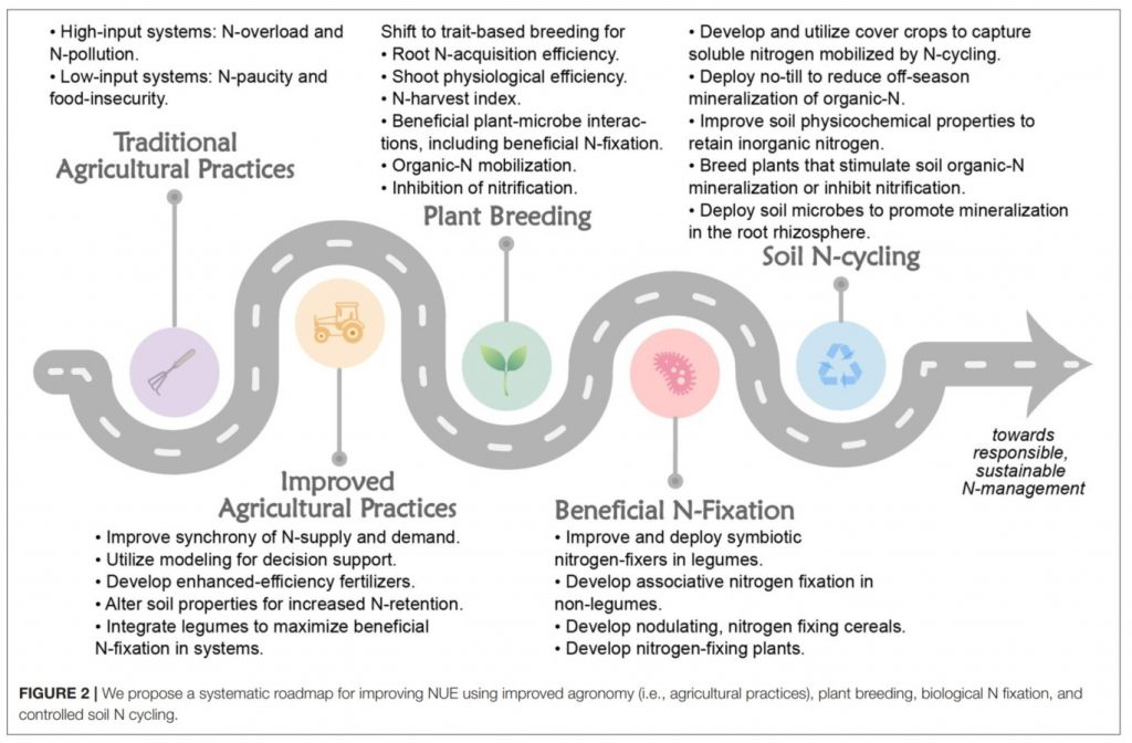 An arrow points from left to right, showing steps to sustainable nitrogen use. These include traditional agricultural practices, improved agricultural practices, plant breeding, beneficia N-fixation, and soi N-cycling.